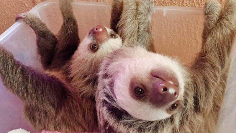 Explore the Unique Sloth Sanctuary of Costa Rica