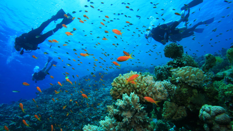 Scuba Diving, Best Experience for Your Vacations!