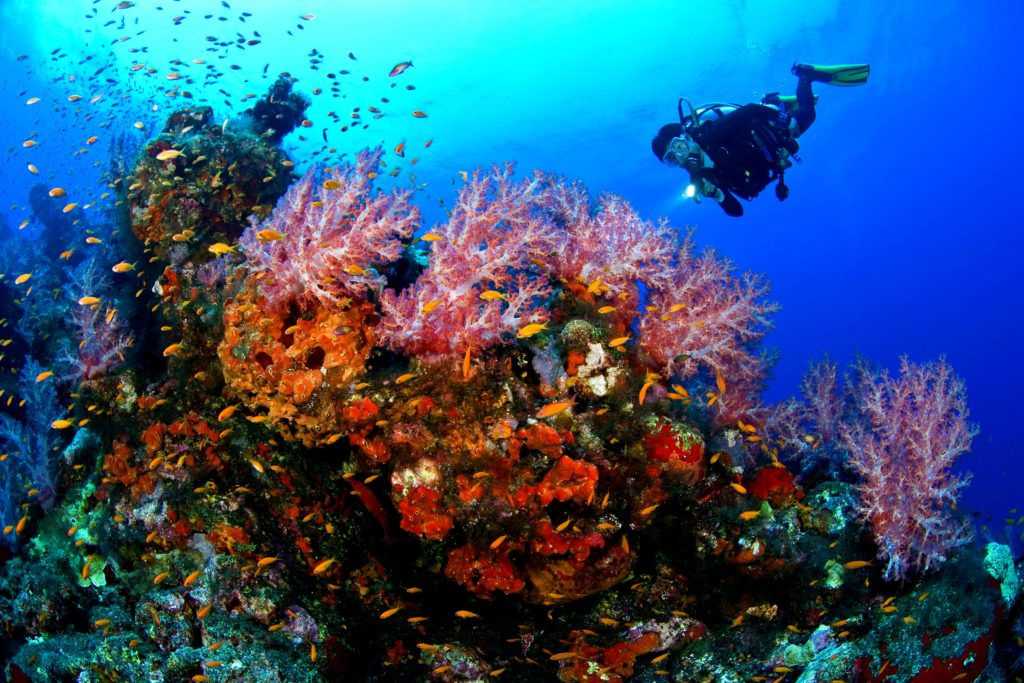 Scuba Diving: Best Experience for Your Vacations!