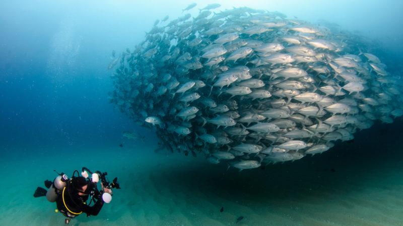 Go Deep Diving Into The Seas!