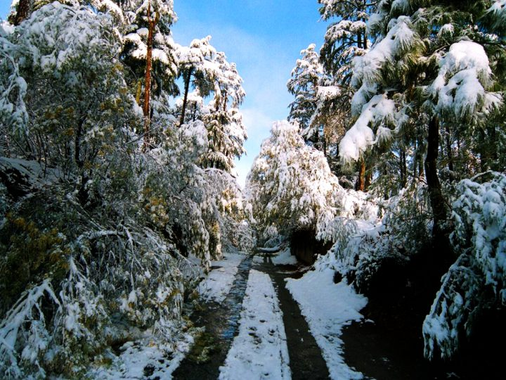 Discover Binsar In The Most Exceptional Way