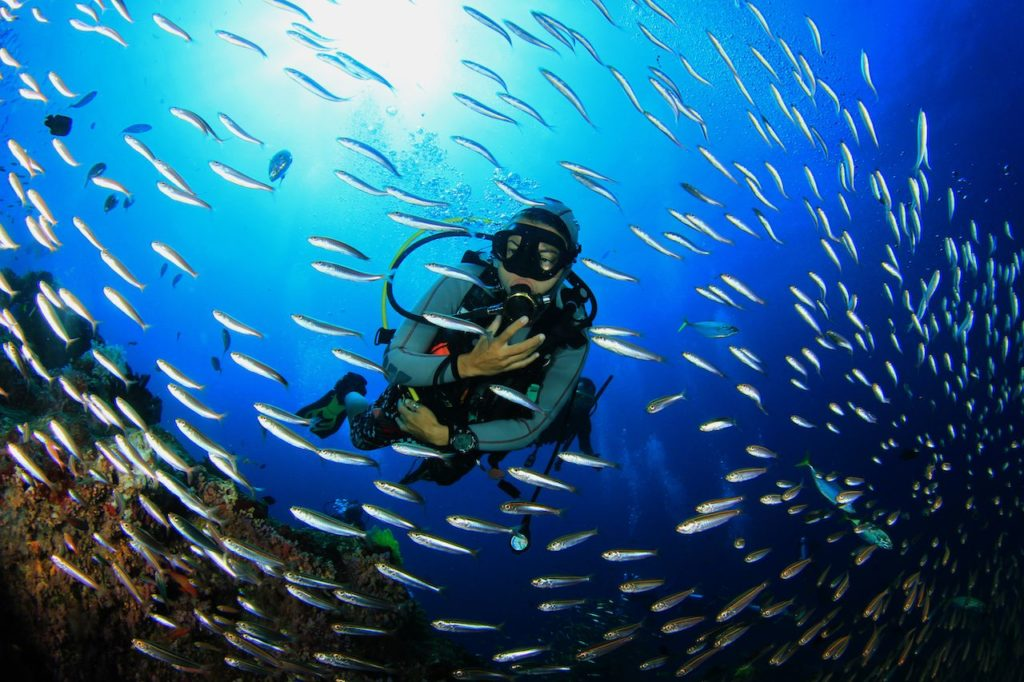 Discover The Ocean World With Wreck Diving!
